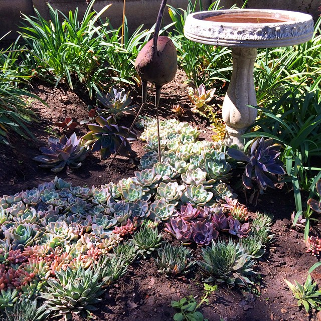 succulent-garden-exmi