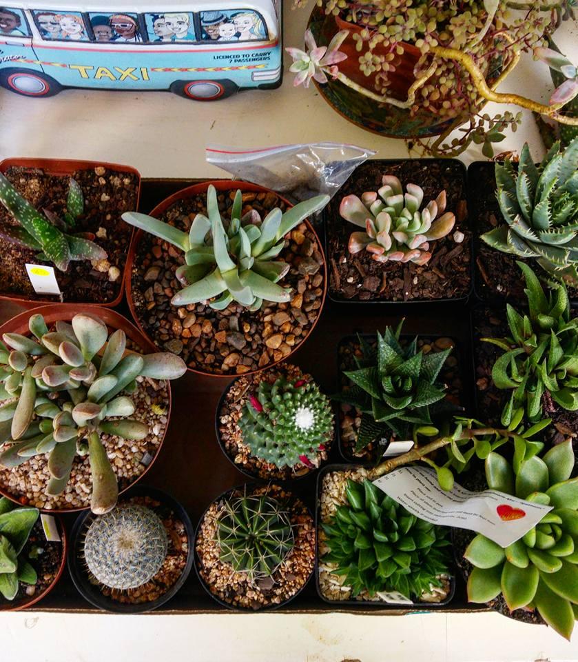 succulentshow2